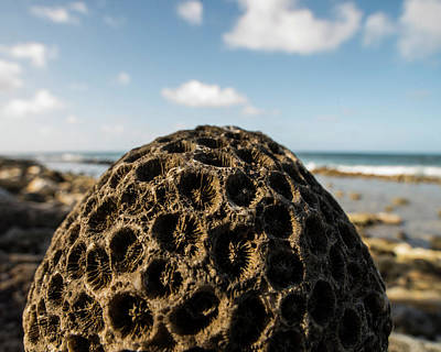 Photograph - Pigeon Island Egg Shaped Coral Saint Lucia St Lucia by Toby McGuire