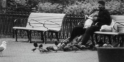 Photograph - Pigeon Man by Nadalyn Larsen