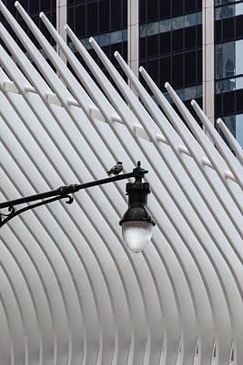 Photograph - Pigeon On Lamppost Near Oculus Center Nyc by Robert Ullmann