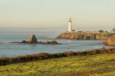 Photograph - Pigeon Point Mustard Field by Wes Jimerson