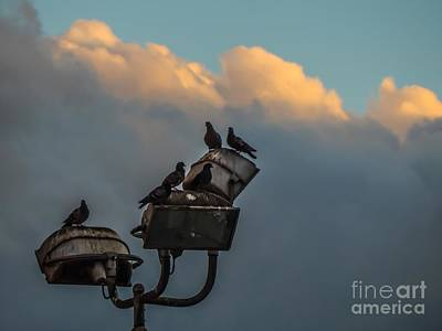 Photograph - Pigeon Rest by Chris Tarpening