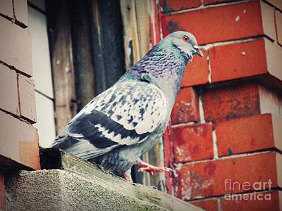 Photograph - Pigeon by Sarah Loft