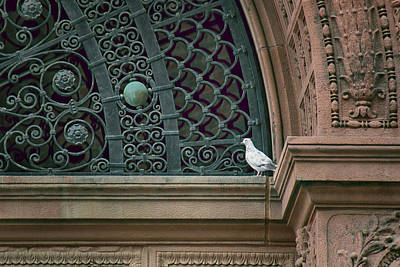 Photograph - Pigeon - The Omaha Building by Nikolyn McDonald