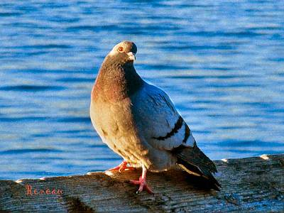 Photograph - Pigeon With Pink Toenails by Sadie Reneau
