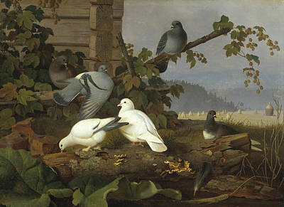 Painting - Pigeons by Ferdinand von Wright