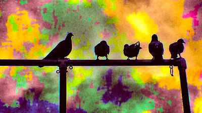 Pigeons In Abstract 2 Art Print