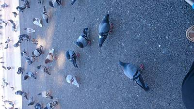 Photograph - Pigeons  by Moshe Harboun