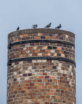 Pigeon Photograph - Pigeons On A Stack by Paul Freidlund