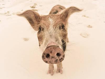 Photograph - Piglet by Craig Gum