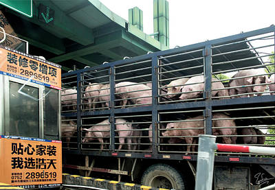Photograph - Pigs At The Tollbooth by Endre Balogh