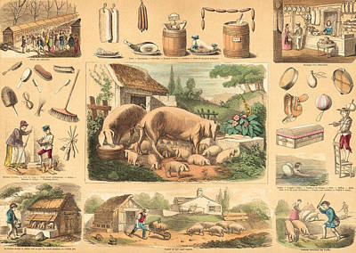 Pig Drawing - Pigs by French School