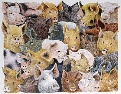 Pig Drawing - Pigs Galore by Pat Scott
