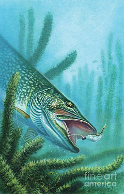 Northern Pike Fish Painting - Pike And Jig by JQ Licensing