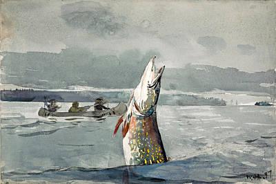 Winslow Homer Drawing - Pike. Lake St. John by Winslow Homer