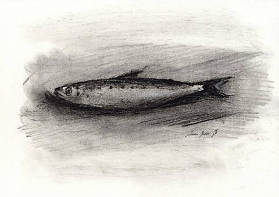 Pencil Painting - Pilchard Drawing by Juan Bosco