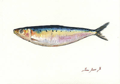 Saltwater Fishing Painting - Pilchard Watercolor by Juan Bosco