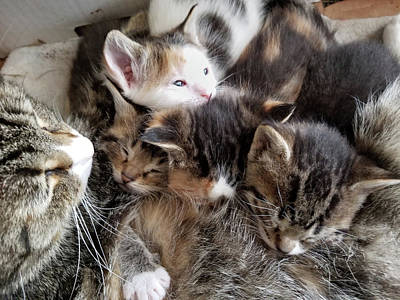 Photograph - Pile Of Kittens by Brook Burling