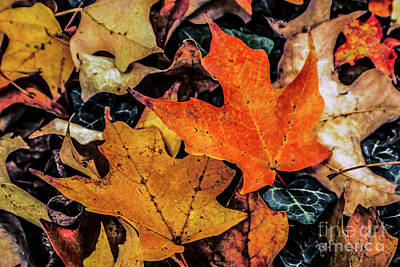 Photograph - Pile Of Leaves by Sandy Moulder