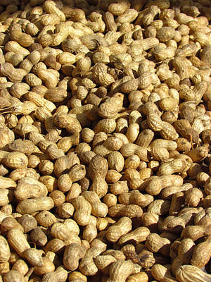Photograph - Pile Of Peanuts by Bonnie Muir