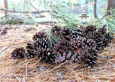Photograph - Pile Of Pine Cones  by Janice Drew
