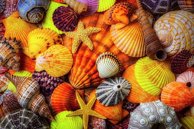 Photograph - Pile Of Sea Shells by Garry Gay