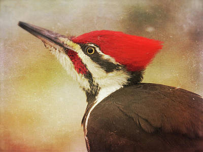Print featuring the photograph Pileated Woodpecker With Snowfall by Heidi Hermes