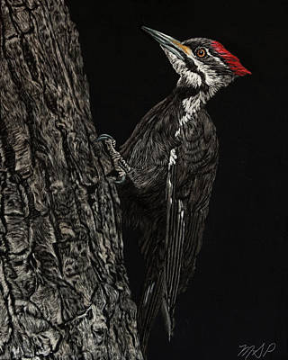 Painting - Pileated Woodpecker by Margaret Sarah Pardy