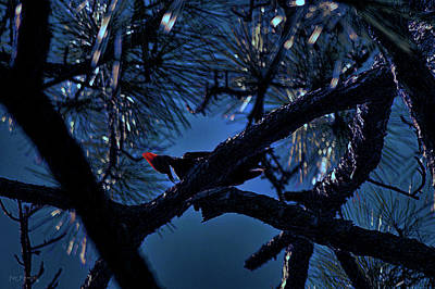 Canary Mixed Media - Pileated Woodpecker Moonlight by Ken Figurski