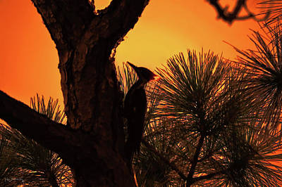 Canary Mixed Media - Pileated Woodpecker Sunset by Ken Figurski
