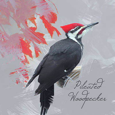 Print featuring the photograph Pileated Woodpecker Watercolor Photo by Heidi Hermes