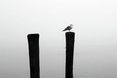 Photograph - Piling And Gull Bw by Mary Bedy