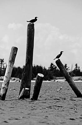 Photograph - Piling Perch by Debbie Oppermann