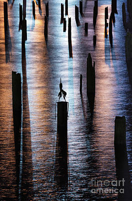 Photograph - Pilings At Night by Patti Schulze