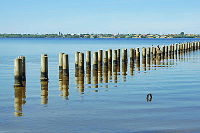 Photograph - Pilings - Caloosahatchee Estuary by Nikolyn McDonald