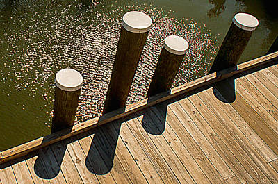 Photograph - Pilings - St. Michaels Md by Dana Sohr