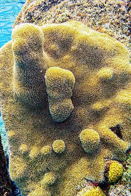 Photograph - Pillar Coral by Perla Copernik