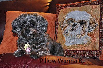 Photograph - Pillow Wanna  Be by Andrea Everhard
