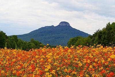 Photograph - Pilot Mountain Amid Cosmos 2 by Kathryn Meyer