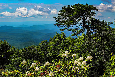 Photograph - Pilot Ridge Rosebays by Dale R Carlson