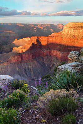 Grand Canyon Photograph - Pima Point Bloom  by Mike Buchheit