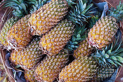 Pineapple Photograph - Pinapples by Tim Gainey