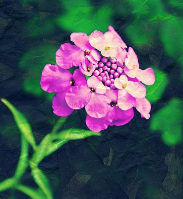 Pincushion Flower Art Print by Cathie Tyler