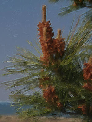 Photograph - Pine Along The Ocean by Kathi Isserman