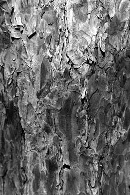 Photograph - Pine Bark 1 Bw by Mary Bedy