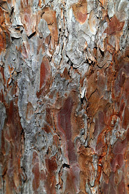 Photograph - Pine Bark 1 by Mary Bedy