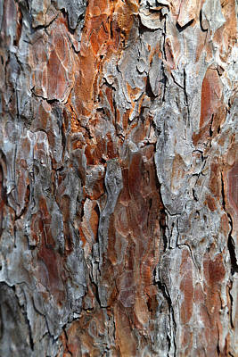 Photograph - Pine Bark 2 by Mary Bedy