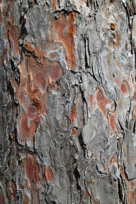 Photograph - Pine Bark 3 by Mary Bedy