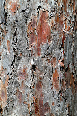 Photograph - Pine Bark 4 by Mary Bedy