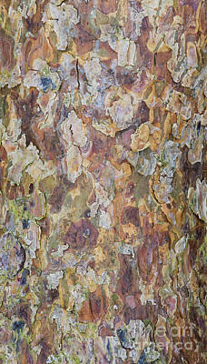 Conifer Tree Photograph - Pine Bark by Tim Gainey