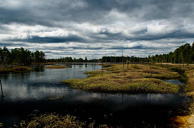 Pine Barrens Photograph - Pine Barrens by Louis Dallara